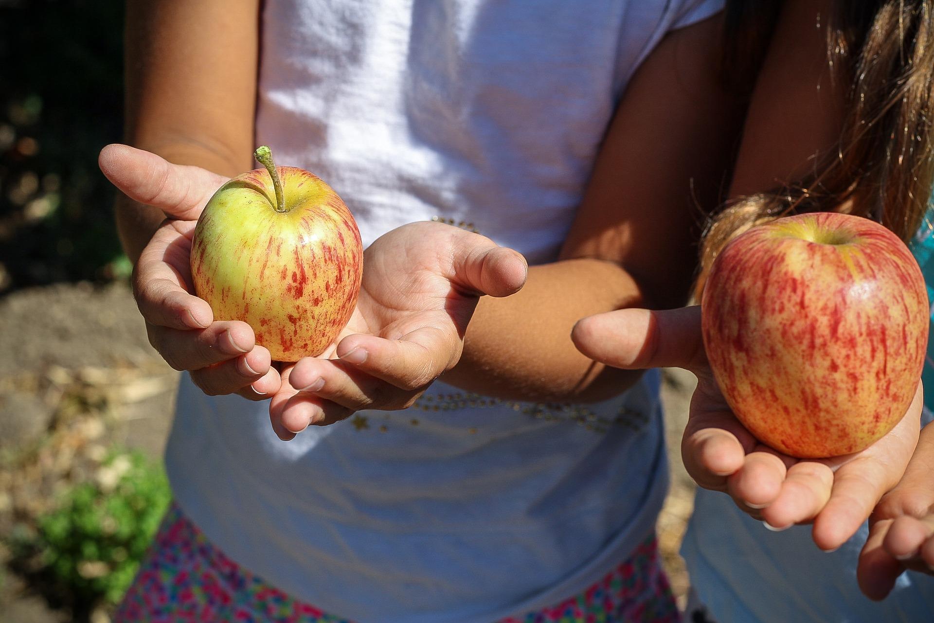 apple 1572648 1920
